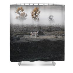 Shower Curtain featuring the photograph The Dream Cow Of Mourning by Brian Boyle