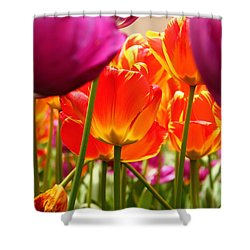 The Drooping Tulip Shower Curtain