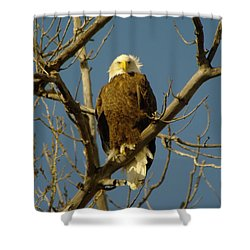 The Eagle Looks Down Shower Curtain by Jeff Swan