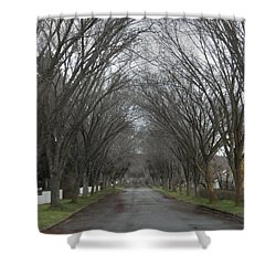 The Elm Arch Shower Curtain