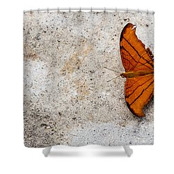 The Elusive Butterfly  Shower Curtain by Rene Triay Photography