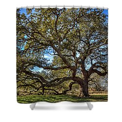 The Emancipation Oak Tree At Hu Shower Curtain