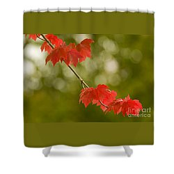The Essence Of Autumn Shower Curtain by Nick  Boren