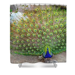 The Eyes Have It Shower Curtain by Jonah  Anderson