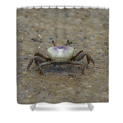 The Fiddler Crab On Hilton Head Island Shower Curtain