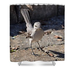 The Fiesty Catbird Shower Curtain by Maria Urso