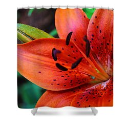 The First Lily Shower Curtain