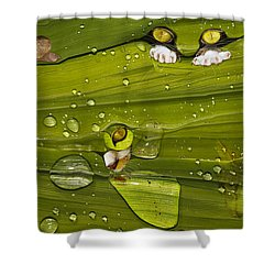 The First Rain Shower Curtain by Angela A Stanton