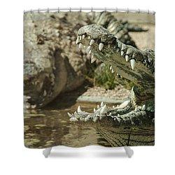 Shower Curtain featuring the photograph The Fool Crocodile by Stwayne Keubrick