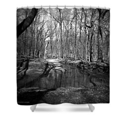 The Forest Shower Curtain by Verana Stark