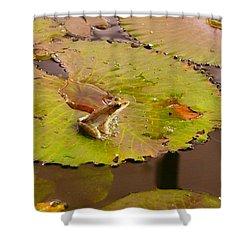 Shower Curtain featuring the photograph The Frog by Evelyn Tambour