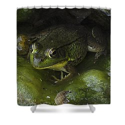 The Frog Shower Curtain by Verana Stark