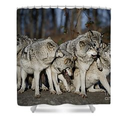 Shower Curtain featuring the photograph The Gang by Wolves Only