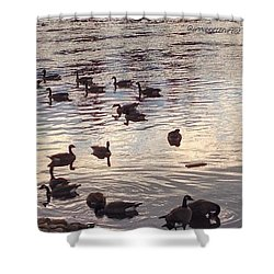 The Gathering - Willamette River Geese Shower Curtain