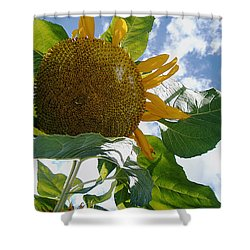 Shower Curtain featuring the photograph The Gigantic Sunflower by Verana Stark