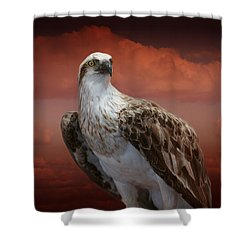 Shower Curtain featuring the photograph The Glory Of An Eagle by Holly Kempe
