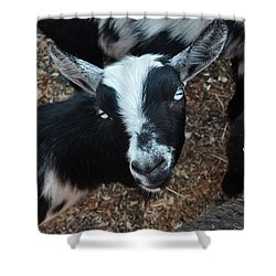Shower Curtain featuring the photograph The Goat With The Gorgeous Eyes by Verana Stark