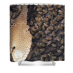 The Golden Hive  Shower Curtain by Shawn Marlow