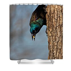 The Grackle Shower Curtain by Mark Alder