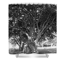The Grandmother Tree Shower Curtain by Sarah Lamoureux