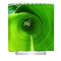 The Grasshopper Flush Shower Curtain by Rebecca Davis
