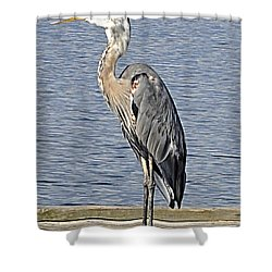 The Great Blue Heron Photo Shower Curtain by Verana Stark