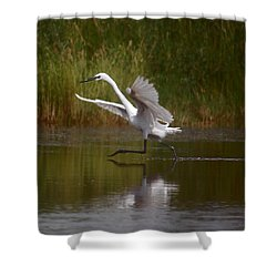 Shower Curtain featuring the photograph The Great Egret by Leticia Latocki