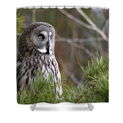 The Great Grey Owl Shower Curtain by Torbjorn Swenelius