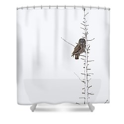 The Grey Hunter On White Shower Curtain by Mircea Costina Photography