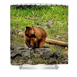 The Grizzly Shower Curtain by Robert Bales