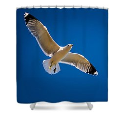 Shower Curtain featuring the photograph The Gull by Janis Knight