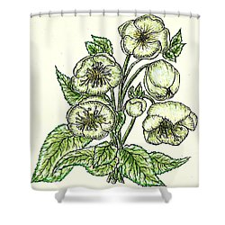 Shower Curtain featuring the drawing The Helleborous by VLee Watson