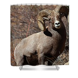The High And Mighty Shower Curtain by Jim Garrison