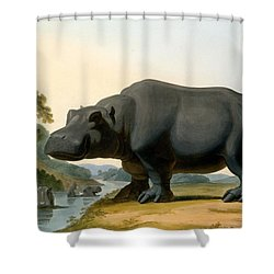 The Hippopotamus, 1804 Shower Curtain by Samuel Daniell
