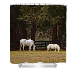 The Horse And The Pony - Standard Size Shower Curtain by Mary Machare