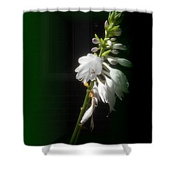 The Hosta Flowers Shower Curtain by Patricia Keller