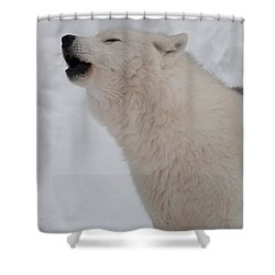 Shower Curtain featuring the photograph The Howler by Bianca Nadeau