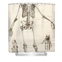Perfect The Human Skeleton Shower Curtain
