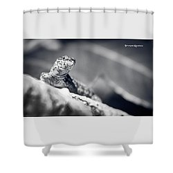 Shower Curtain featuring the photograph The Iron Lizard II by Stwayne Keubrick