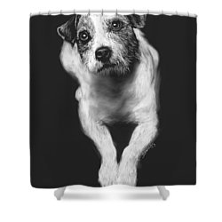 The Jack Russell Stare- Got Ball? Shower Curtain