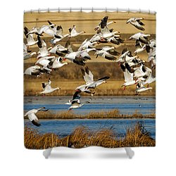 Shower Curtain featuring the photograph The Journey by Jack Bell