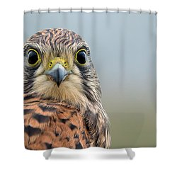 The Kestrel Face To Face Shower Curtain by Torbjorn Swenelius