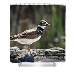 The Killdeer Shower Curtain by Robert Bales