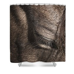 The Kind Eye Shower Curtain