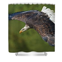 The King Of The Skies... Shower Curtain by Nina Stavlund