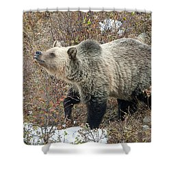 Shower Curtain featuring the photograph The Last Berry by Jack Bell