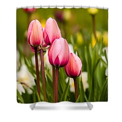 The Last Drops Of Dew Shower Curtain by Melinda Ledsome
