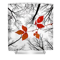 The Last Leaves Of November Shower Curtain