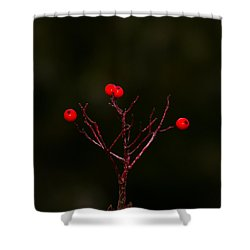 The Last Of Ashberries Shower Curtain by Alexander Senin