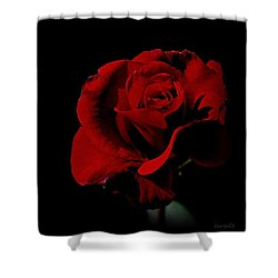 The Last Rose Of  Summer... Shower Curtain